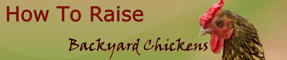 how to raise backyard chickens how to raise backyard